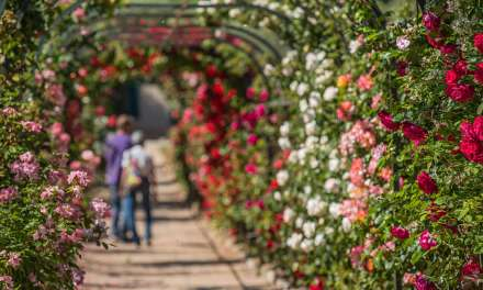 Les Floralies d'Antibes