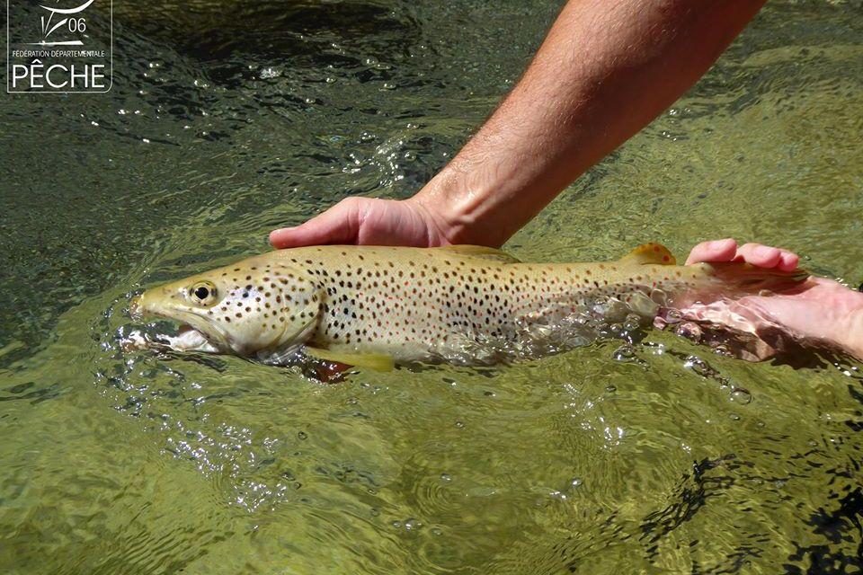 Ouverture de la pêche en première catégorie