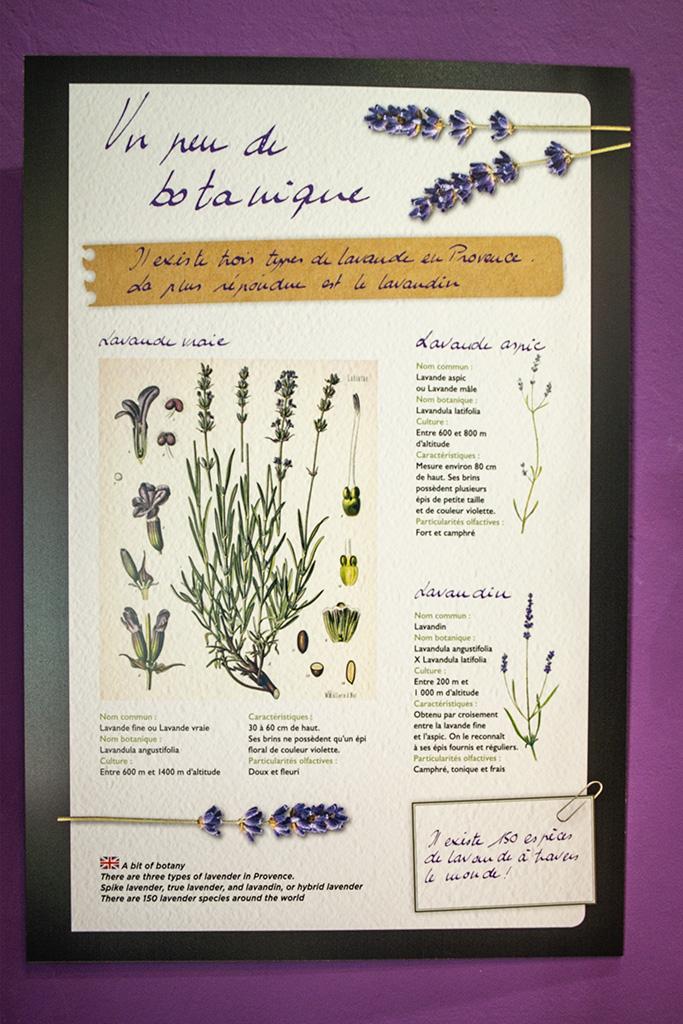 Lavendel kommt in vielen Parfums vor