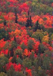 The health of temperate deciduous forests is important for many other plants, animals, and aquatic ecosystems. Earth Floor Biomes