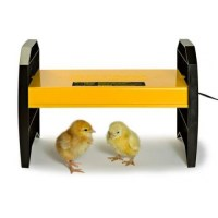 EcoGlow 20 Chick Brooder - Electric Hen - Cotswold Chickens
