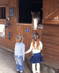 redwings horse sanctuary oxhill cotswolds