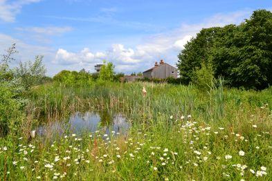 slimbridge-wetland-centre-cotswolds-concierge (7)