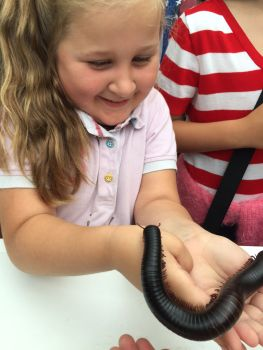 stratford-butterfly-farm-cotswolds-concierge-19