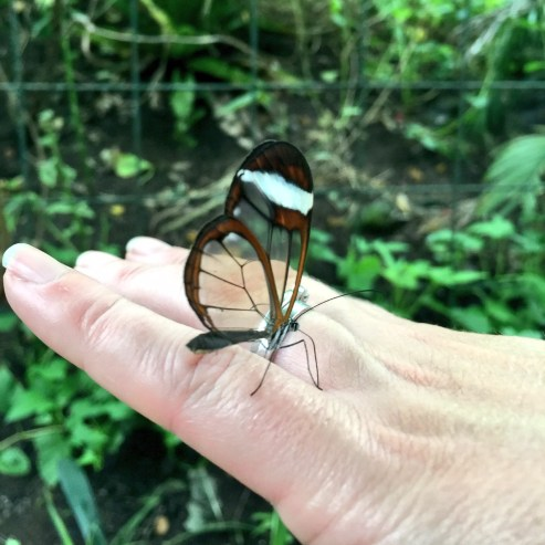 stratford-butterfly-farm-cotswolds-concierge-26