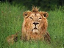 cotswold-wildlife-park-burford-cotswolds-concierge-7