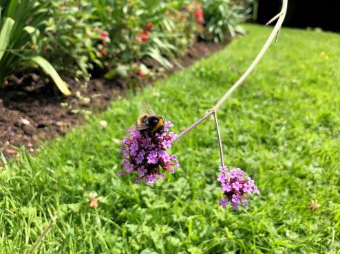 mallory-court-garden-cotswolds-concierge (16)