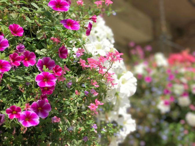 mallory-court-garden-cotswolds-concierge (3)