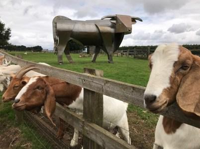 cotswold-farm-park-cotswolds-concierge-summer (5)