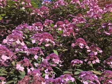 painswick-rococo-garden-summer-cotswolds-concierge (10)