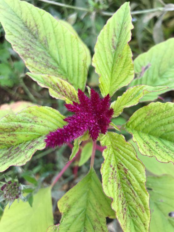 painswick-rococo-garden-summer-cotswolds-concierge (9)