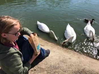slimbridge-wetlands-centre-cotswolds-concierge (26)