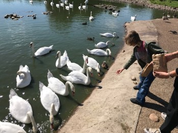 slimbridge-wetlands-centre-cotswolds-concierge (28)