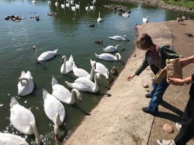 slimbridge-wetlands-centre-cotswolds-concierge (28)