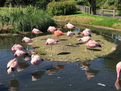 slimbridge-wetlands-centre-cotswolds-concierge (36)