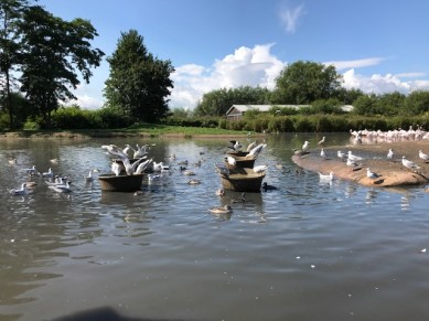 slimbridge-wetlands-centre-cotswolds-concierge (48)