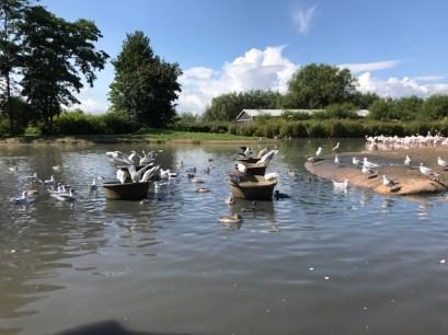 slimbridge-wetlands-centre-cotswolds-concierge (48)