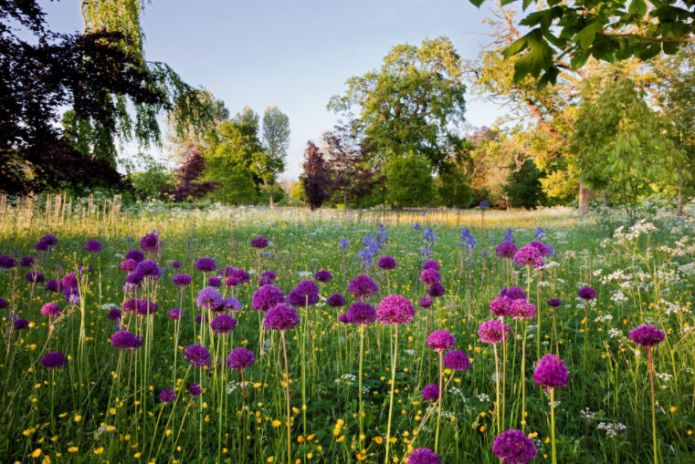 highgrove-garden-champagne-afternoon-tea-cotswolds-concierge (12)