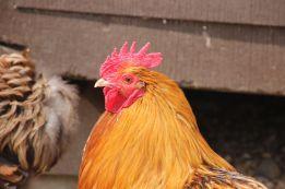 fairytale-farm-chipping-norton-cotswolds-concierge (11)