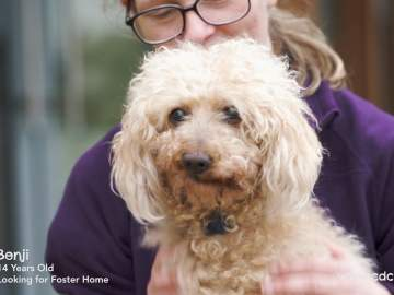 CDCH TV – Fostering with Benji
