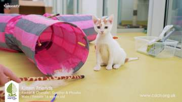 CDCH TV – Kittens of Friends