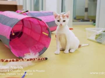 CDCH TV – Kittens of Friends