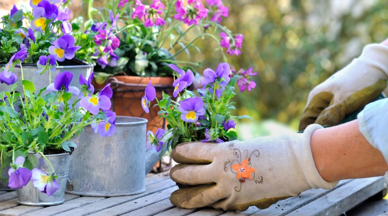 woman's hand hanging a colorful violet flower