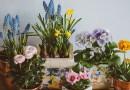 Houseplants are Trendy Again. Tips to Help them Flourish!