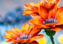 Spring Gardening for Successful Summer Blooms