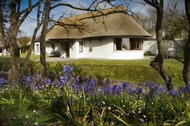 Bluebells in spritn at Thatcher's Rest Cottage