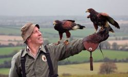 Newgrange Falconry