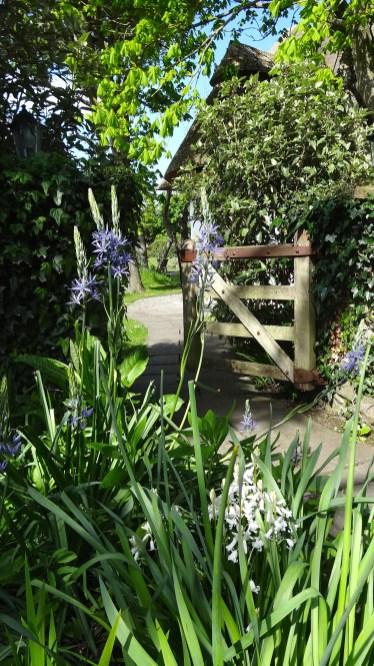 Cottage Gardens Caravan Park Clogherhead Louth