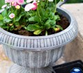 Diy Project Paint An Inexpensive Faux Concrete Planter Cottage Style Decorating Renovating And Entertaining Ideas For Indoors And Out