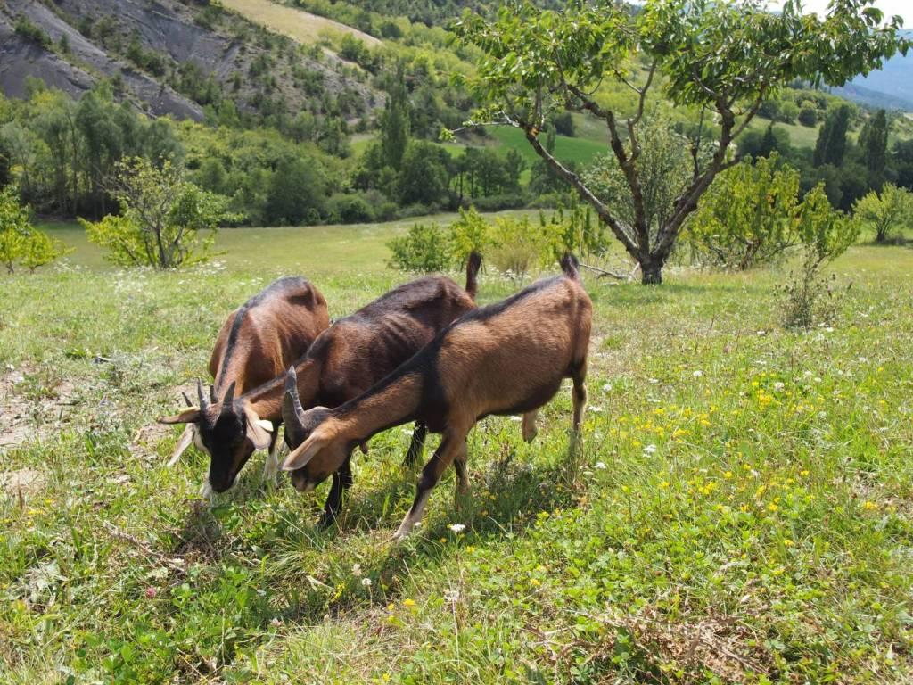 Provence_reise_Travelguide