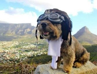 Comment ramener un chien Balinais dans son pays d'origine?