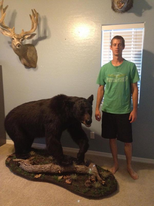 Black Bear Mount  Taxidermy  CouesWhitetailcom