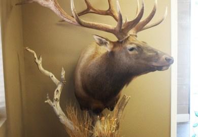 Elk Pedestal Ideas