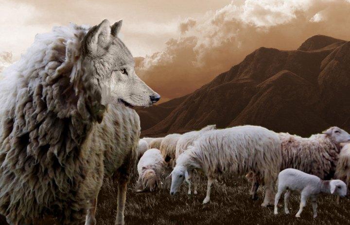 Luz de Maria – Sheep among Wolves