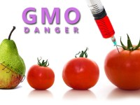 "GMOs, ""Biggest Fraud In The History Of Science"" – Some 'Questions And Answers' For The UK's Royal Society"