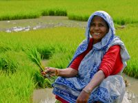 From Livelihoods To Deadlihoods