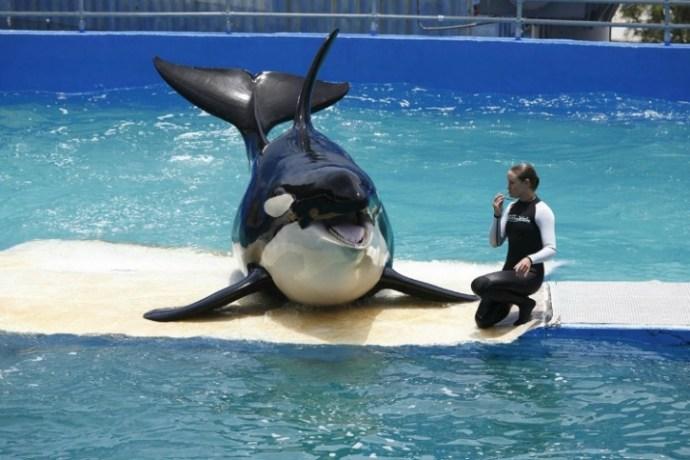 lolita-whale