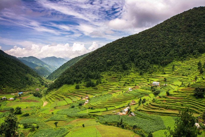 terraced paddy field photo