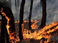 Kashmir: Valley Of Wildfires