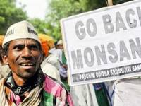 Monsanto In India: The Sacred And The Profane