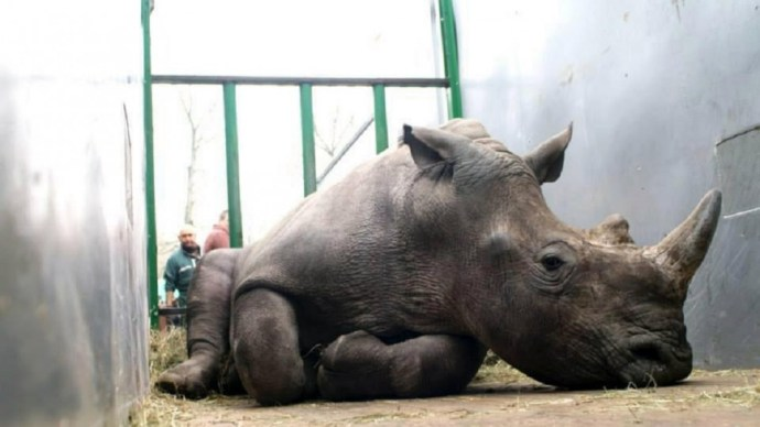 rhino-killed-in-paris-zoo