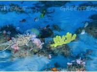 Saving The Amazon Reef