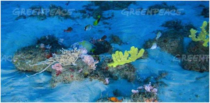 amazon-coral-reef1