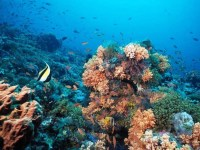 Can Red Sea Corals Save The Worlds Reefs?