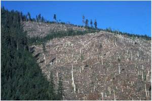 Giving Rights To Trees. But Forgetting The Forests That Are Destroyed