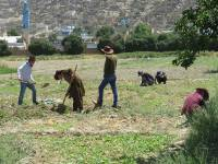 Afghan Peace Volunteers at work in their permaculture plot in Kabul